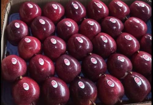 Himachal varieties to be showcased at Apple Promotion Programme by Al Jajira Group in Bahrain
