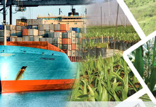 Falling agri export matter of serious concern: TPCI Chairman