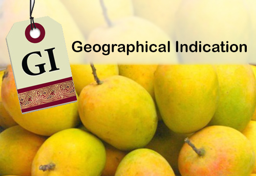 Alphonso mango gets a Geographical Indication tag