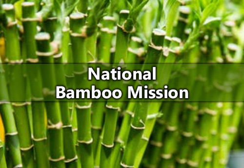 As many as 88 bamboo treatment units approved under National Bamboo