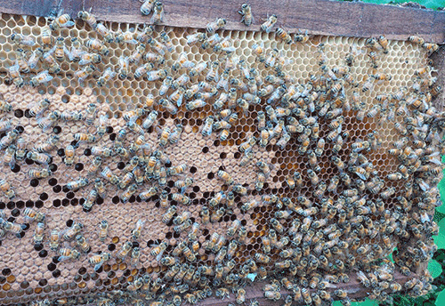 KVIC installs bee boxes with bee colonies at SPG Campus in Dwarka