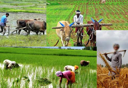 AI-driven Personalized Insurance and Advisory Services to Farmers