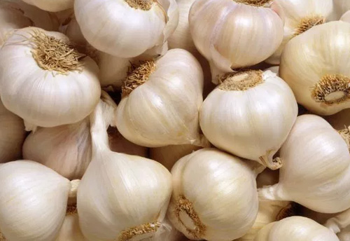 Famous hill garlic of 'Kodaikanal' registered with GI Tag