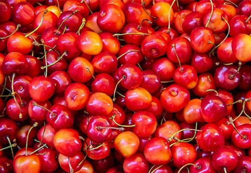 First consignment of Mishri Cherries from Kashmir leaves for Dubai