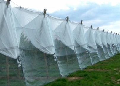 Use of Agrotextiles to be promoted in North East