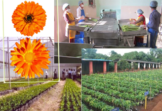 Government plans measures to promote horticulture