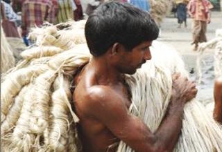 Jute in Bihar - Patna diaries